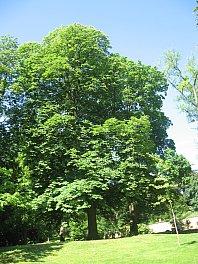 Baumkataster und Vitalitätskontrolle