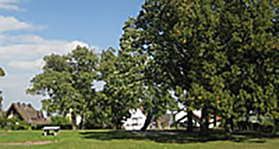 Baumkataster Schlossgarten