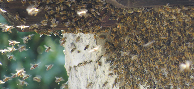 umweltplanung-Bienenvolk.jpg