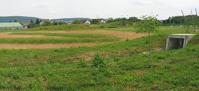 wasserwirtschaft-sandhausen-versickerungsmulde.jpg